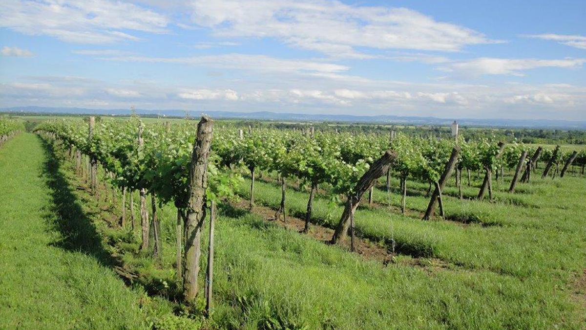 Weingarten-himmel